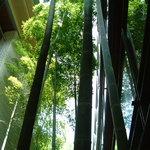 箱根桜庵 - 竹林に浄化されていくよう・・・