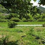 菜心味庵 きた岡 - 熊野古道 中辺路の滝尻王子から車で10分かからない位のトコにある農家カフェに里山ご飯を食べに=3=3=3 ご夫婦2人でやっておられるお店で、庭から自家農園が眺められる☆彡 猫ちゃんも迎えてくれる♪