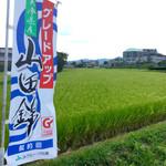 西脇大橋ラーメン - 【おまけ写真】帰り道、JR比延駅までの途中にこんな田んぼが広がっていた。