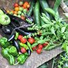 アグロピッツェリア ダ パンダ - 料理写真:畑で収穫した野菜