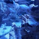 ebibari - 蒼い照明の熱帯魚水槽