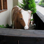 レストラン シェノワ gite - お店の入り口には牛さんのオブジェが。  08/06