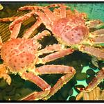 蟹工船 - 料理写真:生簀にはたらば、ずわい、毛蟹がたくさん!