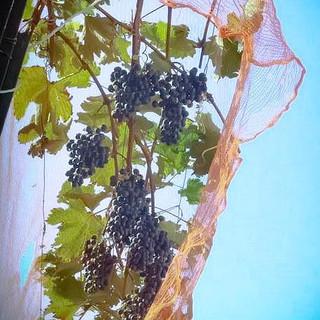 季節感溢れる上質な料理との相性を考えた種類豊富なワイン