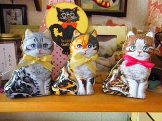 シャトロワ 元町本店 - 先住猫とご対面、写真はやすこ。