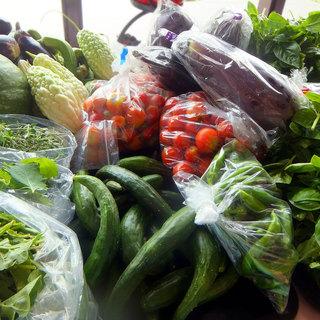 契約農家から直接届く美味しい野菜