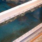 鳴門水産 - 入り口に水槽が、中にはアジ・ひらめetc
