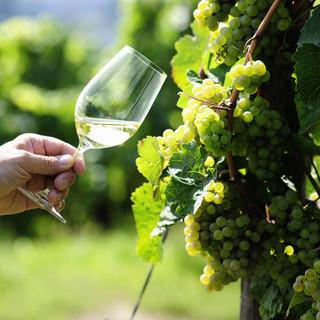 絞りすぎないビオ、有機ワインをご用意しております