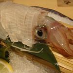 酔灯屋 - 呼子のイカ 漁師 中西さん釣果