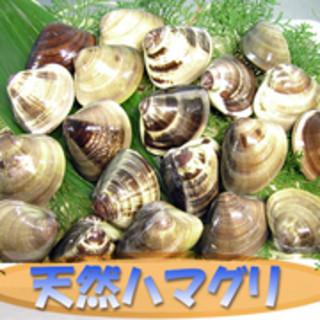 加布里限定♪濃厚な味わいの貴重な国産天然ハマグリ!!