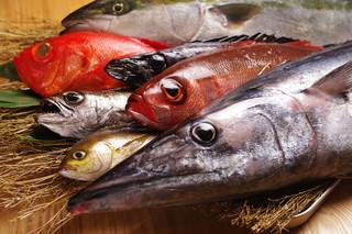 渋谷イカセンター - 取れるお魚は毎日変わります。毎日が真剣勝負!!