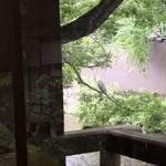 56154779 - 青鷺が小魚を狙っていた