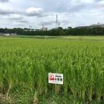 47都道府県の日本酒勢揃い 夢酒 - 米づくりから行ういづみ橋酒造