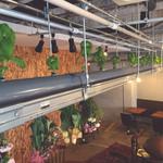 ガレリア - 店内植物工場