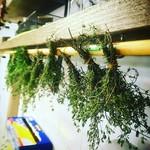 ブロカント - 屋上で栽培しているハーブたちは、出荷できるほどの量。現在乾燥ハーブ作成中