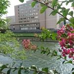光原社 可否館 - 百日紅も 咲いてました     敷地突き当たりからは北上川