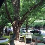 キハチ - 外苑いちょう並木にあるテラス
