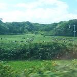 ぽっぽ亭 - 牛の大群も。