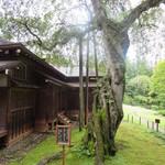 日光田母沢御用邸記念公園 - 日光市指定天然記念物 シダレザクラ(樹齢 約400年)