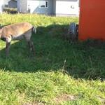 56551066 - 駐車場で鹿さんがお出迎えしてくれました!