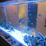56600657 - 綺麗な魚が泳いでいる水槽