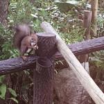 翡翠館 てんぐの蔵 - たまたま訪れるかわいい森の住人