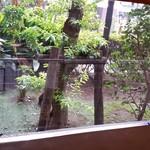 Sakesakanaomata - カウンター前には、ちょっとしたグリーンかあった。