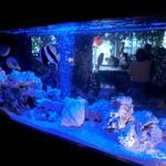 アウルの森 - 熱帯魚