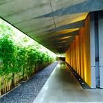NEZUCAFE - 駐車場側から入口エントランス(金明竹の竹林が美しいです)