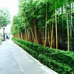 NEZUCAFE - 美術館外壁の竹林
