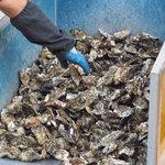 かき小屋 - 牡蠣
