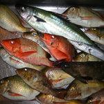 一龍 - 店長が釣ってきた魚 超新鮮