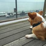 57489707 - テラスからの景色(犬目線)