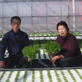 [契約農家直送!]丹精込めて育てられた有機野菜を使用してます