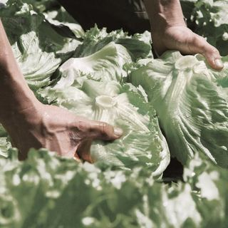 品質に自信ありの新鮮野菜