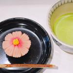 鶴屋吉信 TOKYO MISE - 秋桜