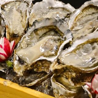 北海道仙鳳趾より直送【殻つき生牡蠣】1個130円の原価価格!