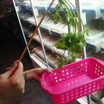 大重慶 麻辣燙 - パクチーも串で提供!