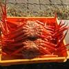 伝宝丸 - 料理写真:蟹がっつり