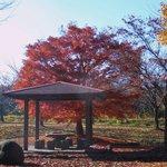 さつき食堂 - 直江石堤公園の秋2