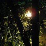 吉祥寺庭宴 - 業態は…竹林個室ダイニング