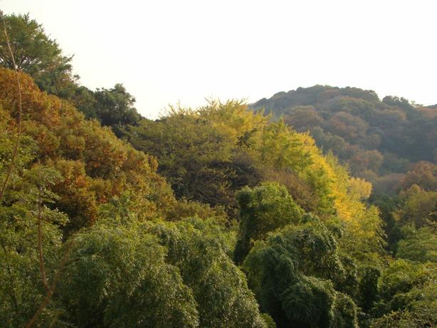 ル・ミリュウ 鎌倉山