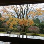 5882357 - 晩秋のお庭 紅葉も終わりに近ずいて