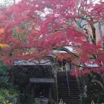 はなり - 神蔵寺の紅葉