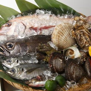 毎朝仕入れ、築地直送鮮魚。
