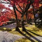 万葉 - お寺のお庭好きやよ♡