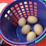 八光軒 - 料理写真:1個無料のゆで卵