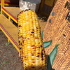 Uncle Woody's BBQ Corn - 料理写真: