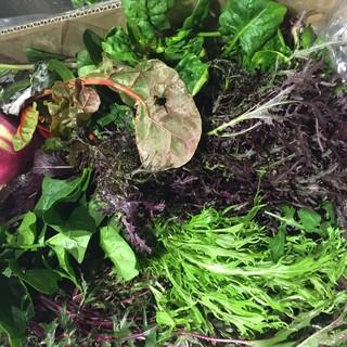 【産地直送野菜】川田農園直送の野菜は「うまい!」