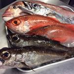 じんりきシーフードバール - 201611、地物のお魚・一例。 真鯛、黒ムツ、スミヤキはお刺身で提供します! 白ムツはアクアパッツァにして提供します! 赤ムツはご希望の調理方法にて提供します! この機会に是非小田原のお魚をご賞味してください。